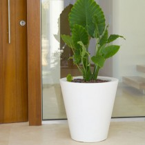 Cono Rond large