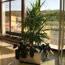 Plantenbak Roestvrij staal Vierkant